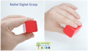 Radial digital grasp, typical pencil grasp development in children.