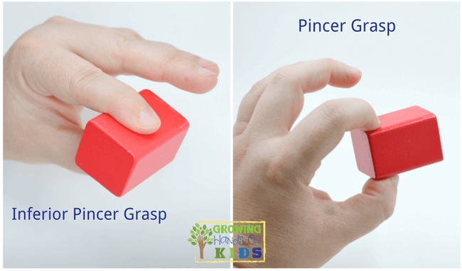 Inferior pincer and pincer grasp, typical pencil grasp development in children.