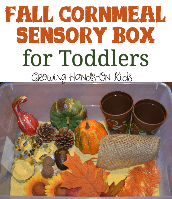 Fall cornmeal sensory box for toddlers and preschoolers.