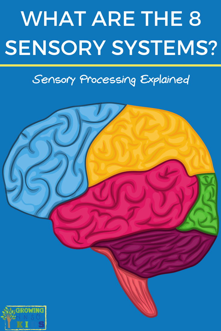 What are the 8 senses? Sensory Processing Explained for parents, educators, and therapists. #SensoryProcessing #SPD #SensoryProcessingExplained #ChildDevelopment