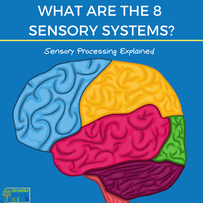 What are the 8 senses?