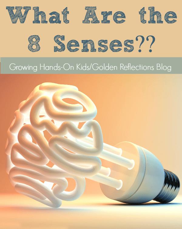 The 8 Senses