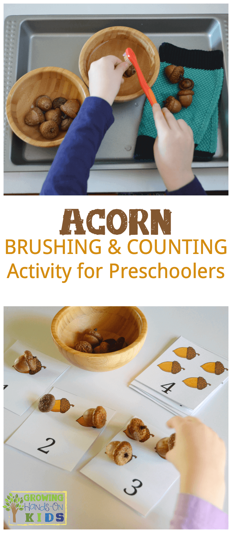 Acorn brushing and counting activity for preschoolers, the perfect fall/autumn activity with real acorns.