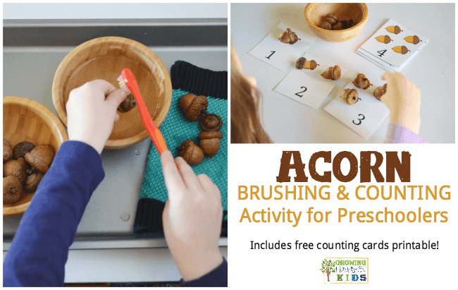 Acorn brushing and counting activity for preschoolers